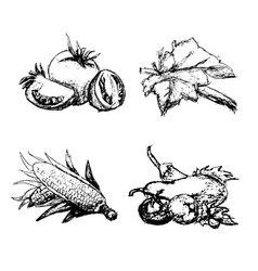 hand drawn vintage set of vegetables vector image