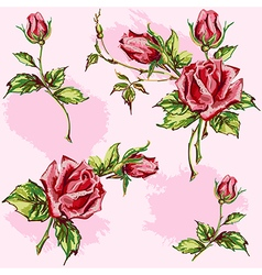 Rose pattern on pink vector