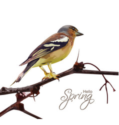 sparrow on a branch isolated spring card vector image