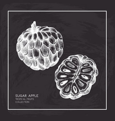 Sugar-apple hand drawn vector