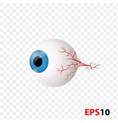 eye human internal vision organ vector image
