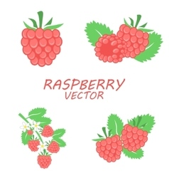 flat raspberry icons set vector image vector image