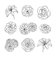 Set of rose lily peony and chrysanthemum flowers vector