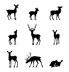 silhouette deer on white background vector image