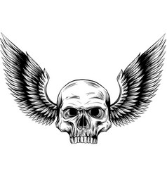 skull and wings in engraving vector image