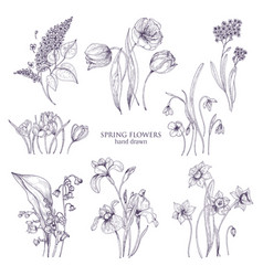set of gorgeous botanical drawings of spring vector image vector image