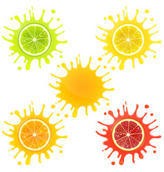 citrus fruit in splashes of juice vector image