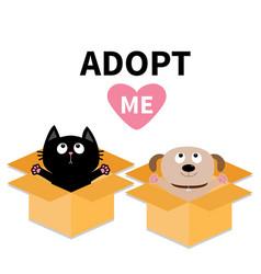 adopt me dont buy dog cat inside opened cardboard vector image