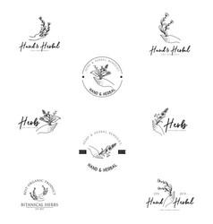 hand herbal logo template vector image