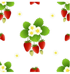 Red strawberry and flower on white background vector