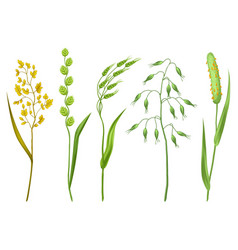 Set of herbs and cereal grass floral collection vector