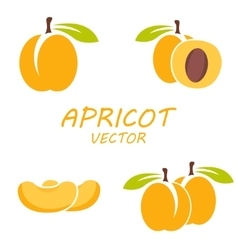 flat apricot icons set vector image