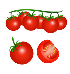 A cherry tomatoes on a branch and half a tomato vector