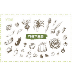 hand drawn vegetables set vintage icons vector image