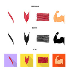 isolated object of fiber and muscular symbol set vector image