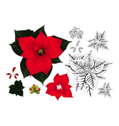 red poinsettia outline vector image vector image