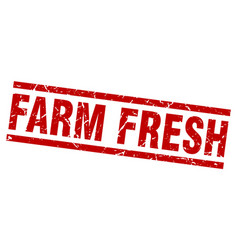 square grunge red farm fresh stamp vector image