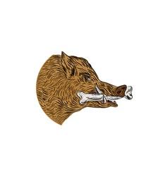 Wild Boar Razorback Bone In Mouth Drawing vector image