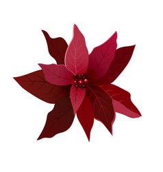 Beautiful red poinsettia flower vector