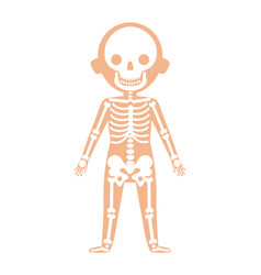 Boy body anatomy with skeleton system vector