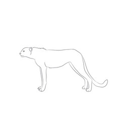 cheetah stands drawing lines vector image