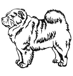 Decorative standing portrait of chow chow vector