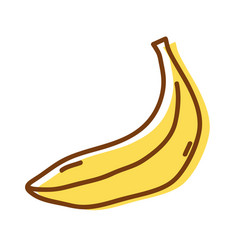 Delicious fresh banana organic fruit vector