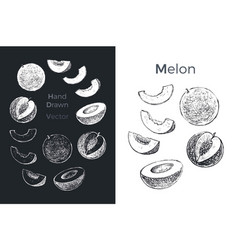 hand drawn melon icons vector image