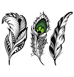 isolated feathers vector image