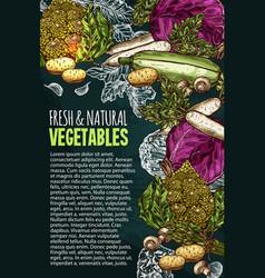 Sketch poster natural fresh vegetables vector