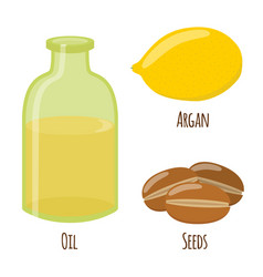 argan fruit oil nuts seeds for herbal cosmetics vector image