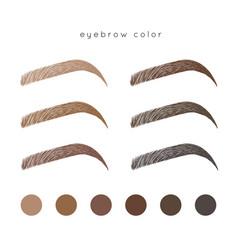 eyebrow color vector image vector image