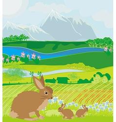 Bunnies in green meadow vector
