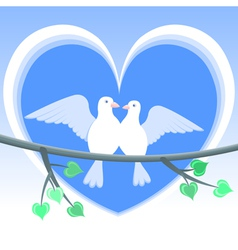 doves love vector image