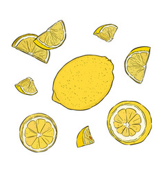 hand-drawn of lemon vector image