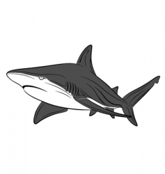 vector shark tattoo vector image