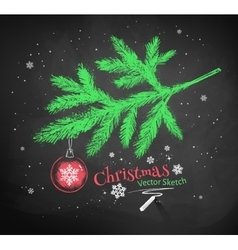 Christmas tree fir branch vector