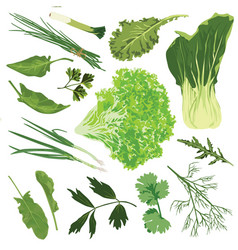 Edible greens on a white background vector