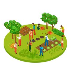 gardening workers fruit tree and plants isometric vector image
