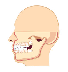 Human head with teeth jaw and wisdom tooth inside vector