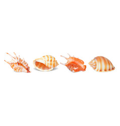 Set of seashells vector