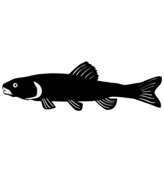 Silhouette of chub vector image