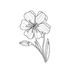 Marigold Flower Monochrome Drawing For Coloring vector image vector image