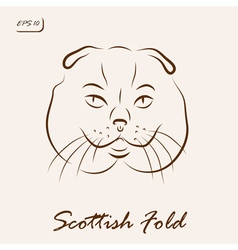 Scottish Fold vector image vector image