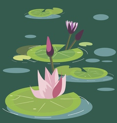 blossoming lotuses vector image vector image