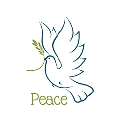 Dove or pigeon with olive branch vector image vector image