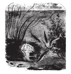 Sticklebacks and nest vintage vector