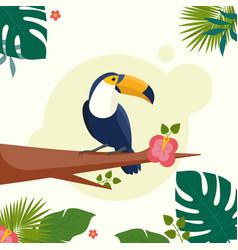 Tropical bird toucan cartoon vector