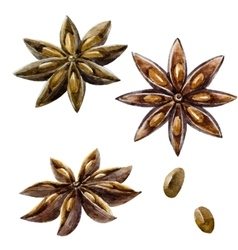 Watercolor hand drawn spice anise vector image