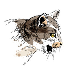 colored hand sketch cat head vector image vector image